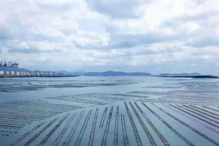 gyeongsangnam-do-parc-huitres-coree-du-sud