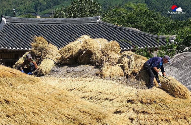Des artisans réparent les toits de chaume des hanok de Naganeupseong