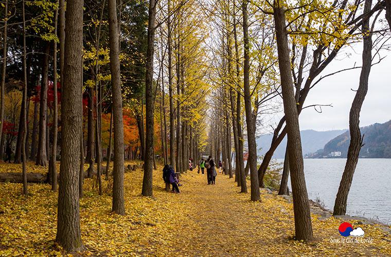 L'automne sur l'île de Nami, Gapyeong Corée du Sud