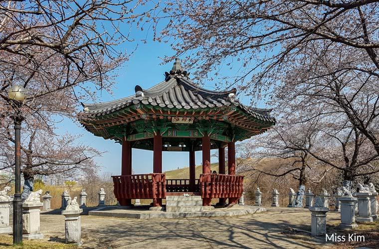 Cerisiers du Parc Olympique de Séoul