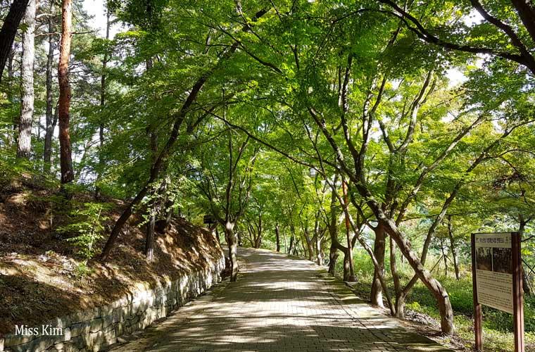 Promenade sous les arbres à Buyeo en Corée du Sud