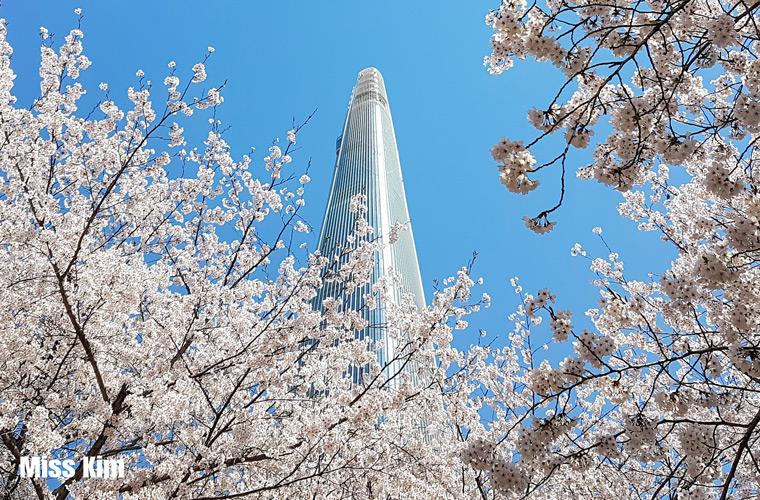 La tour Lotte World cachée par des cerisiers en fleurs
