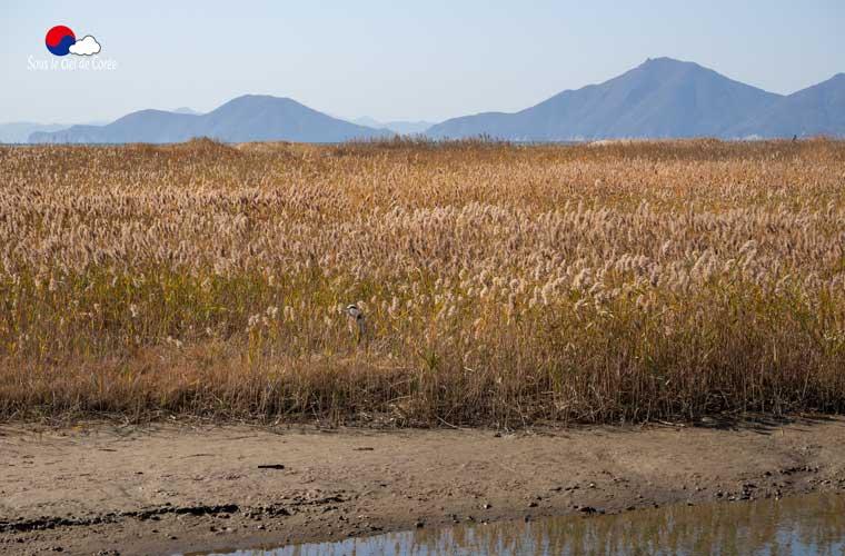 Sentier écologique Gouin, plage de Dadaepo à Busan