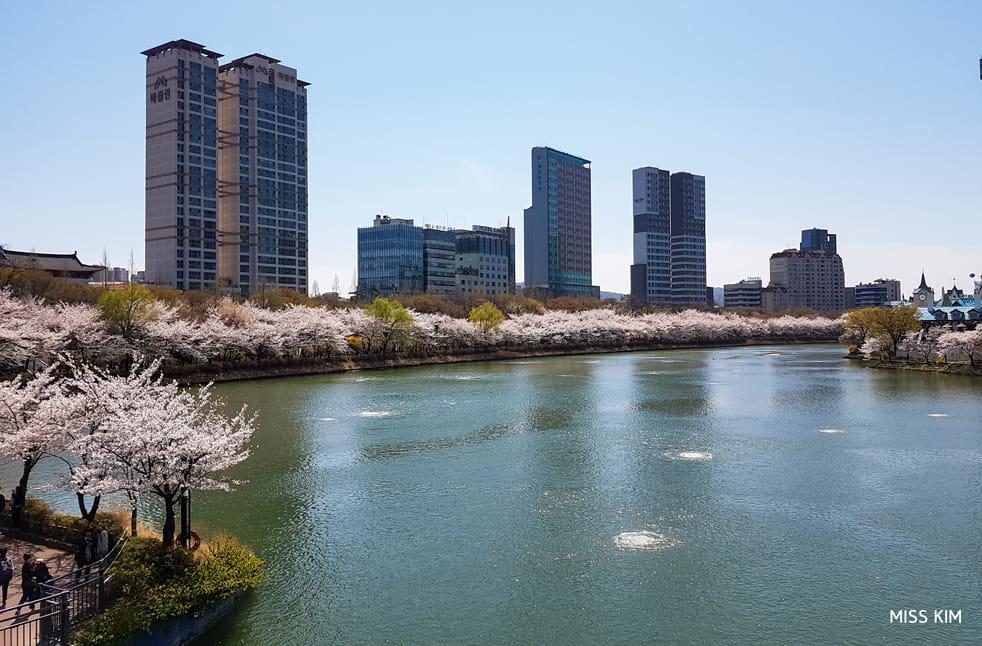 Cerisiers du lac Seokchon, à Séoul