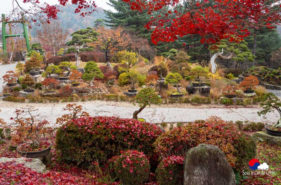 La collection de bonsaïs du Jardin du matin calme en Corée du Sud