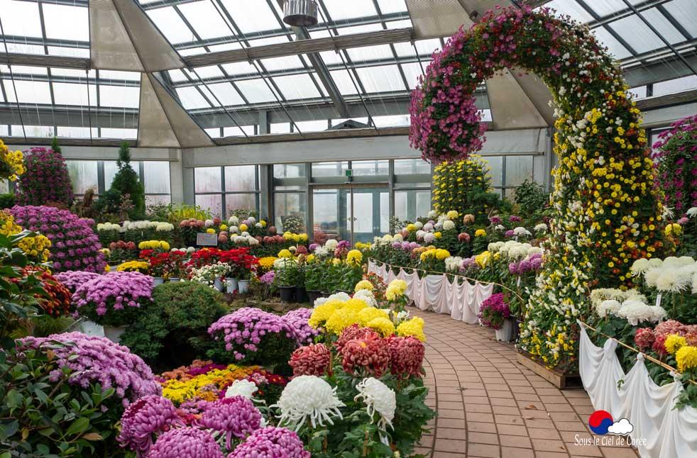 Exposition de chrysantèmes en 2019 au Jardin du Matin calme en Corée du Sud