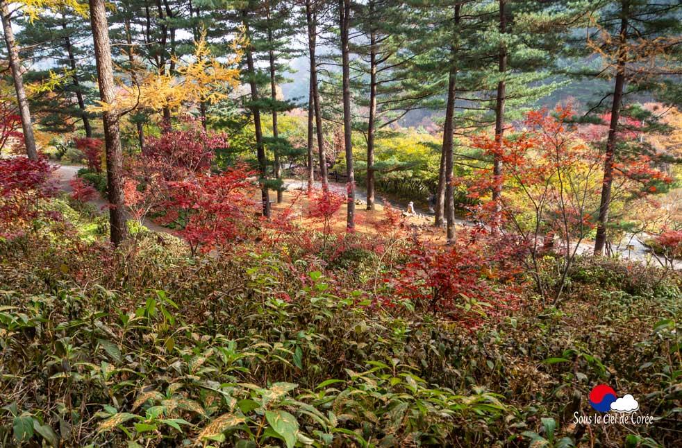 La promenade du Jardin du Matin calme en Corée du Sud