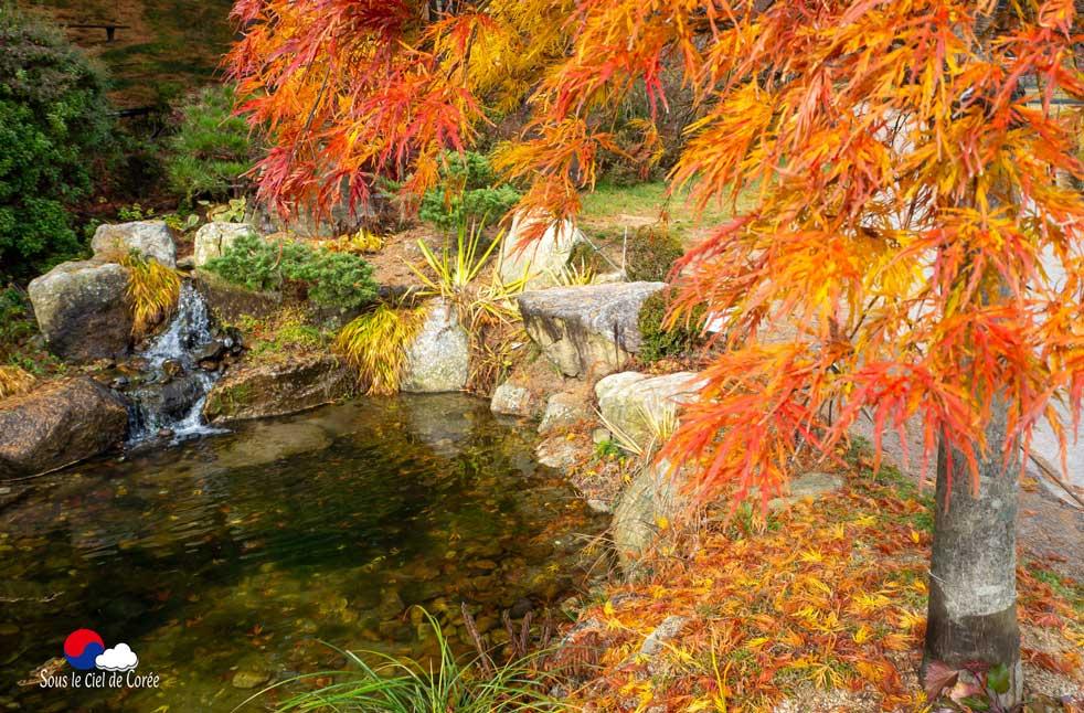 Erable dans le jardin du ruisseau du Jardin du Matin calme en Corée du Sud