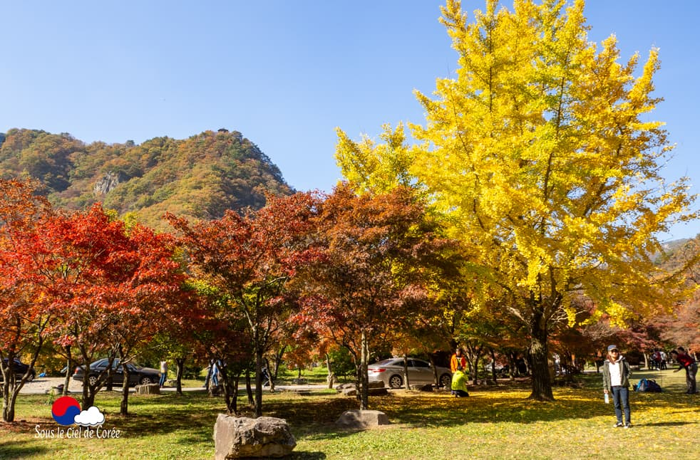 Feuillage d'automne dans le parc du Mont Naejangsan en Corée du Sud
