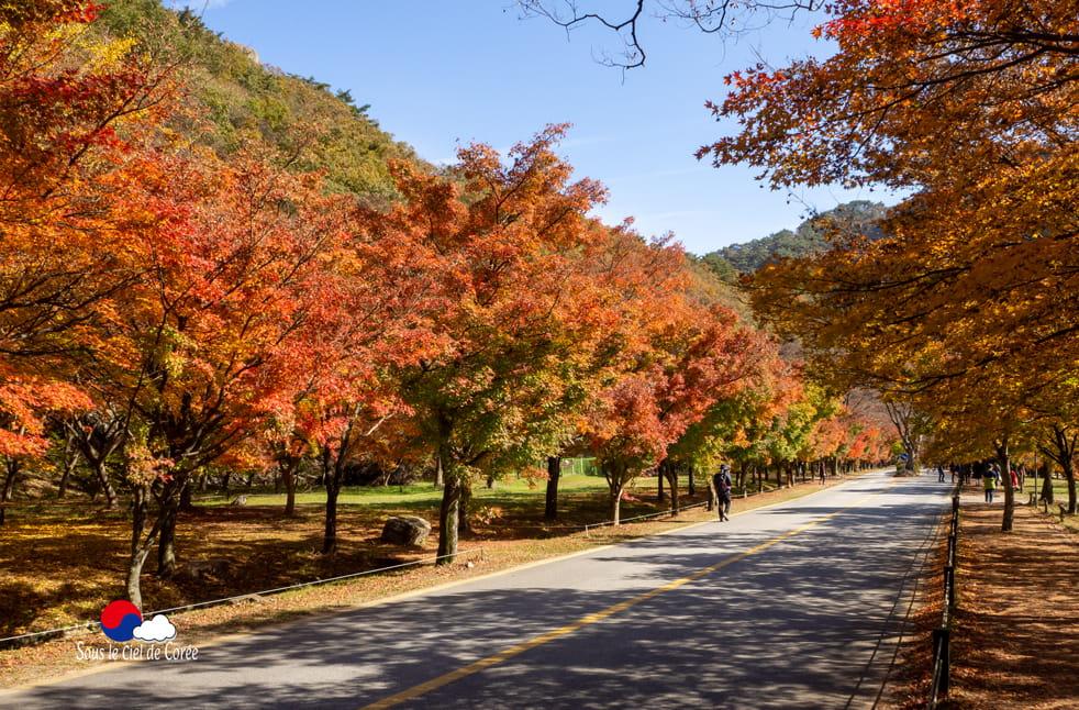 Mapple street (allée des érables), Pavillon Uhwajeong, Mont Naejangsan en Corée du Sud